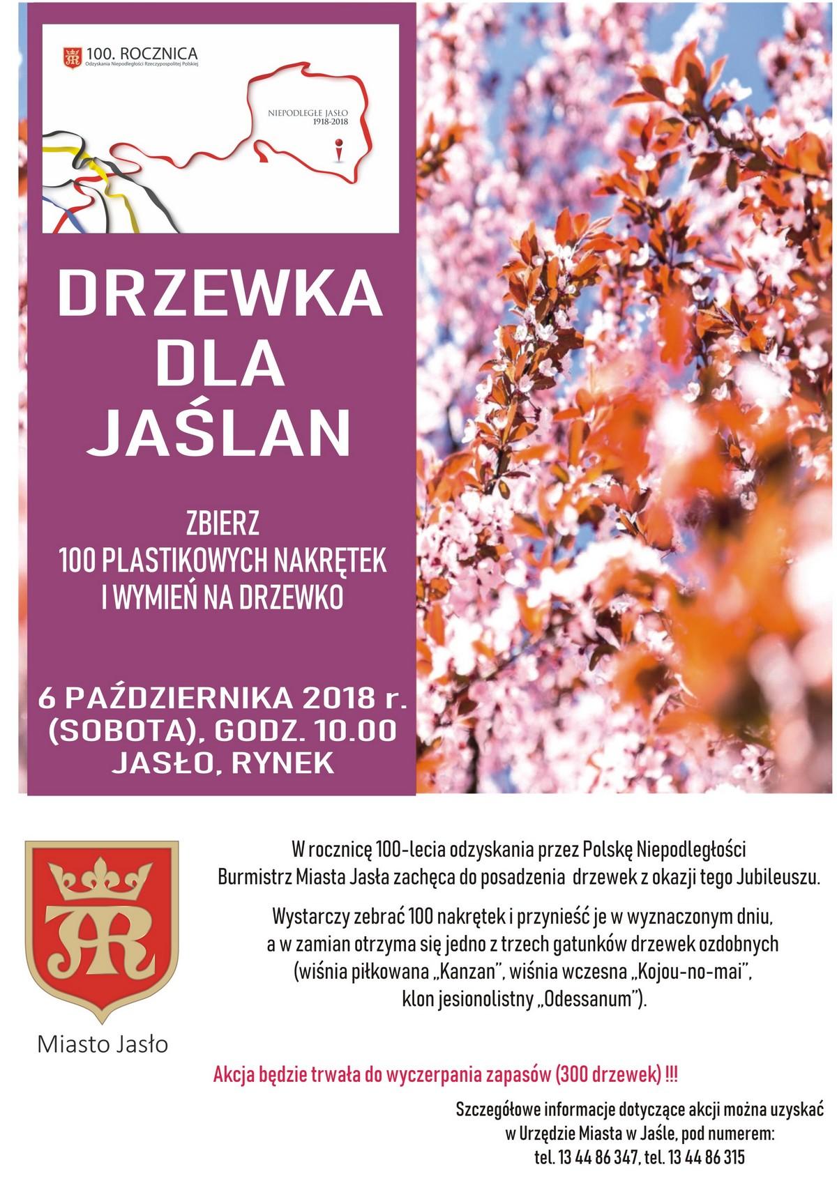 20181006__drzewka